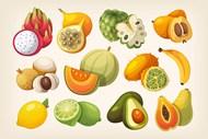 夏季热带水果插画矢量下载