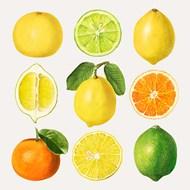 手绘水果柑橘矢量图