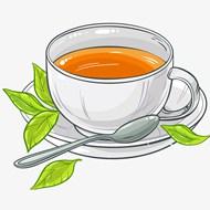 一杯绿茶插画矢量模板