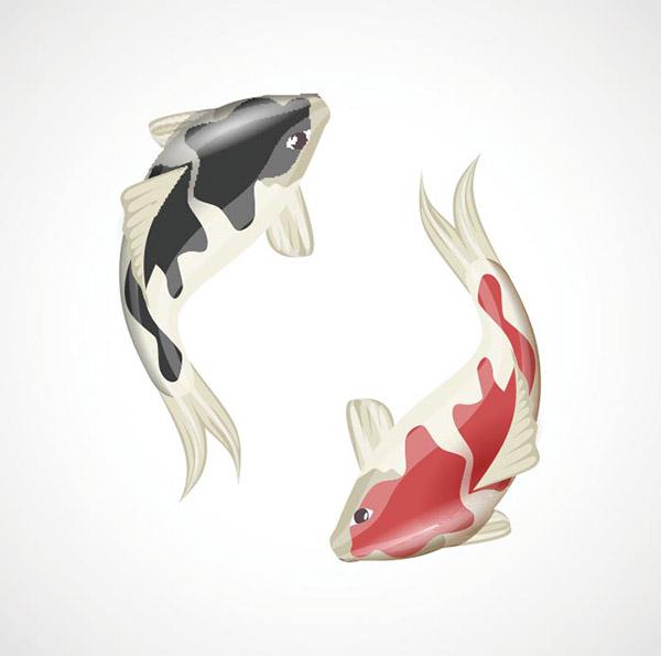 锦鲤鱼插图矢量模板
