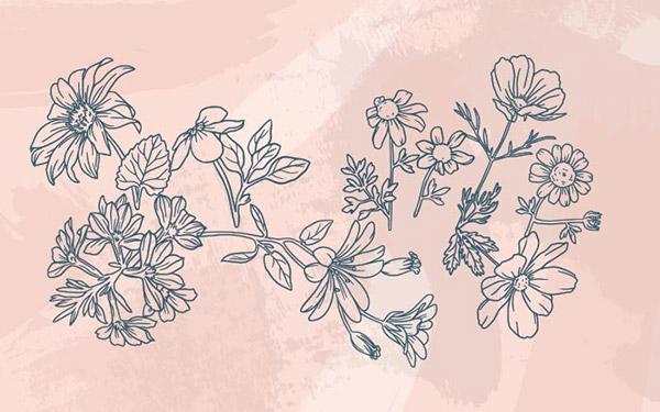 线描花卉矢量图片