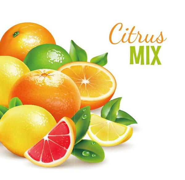 柑橘类水果矢量图