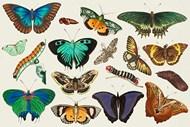 复古蝴蝶彩色插图矢量图片