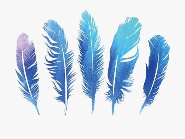 蓝紫色的五个羽毛矢量模板